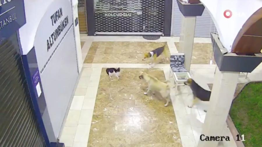 ¡Mamá al rescate!: Gata defiende a su cría del ataque de tres perros