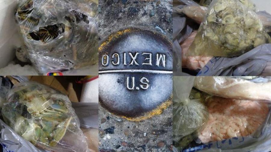 Confiscan en Puente Hidalgo-Reynosa mariscos que no contaban con documentación para ser importados