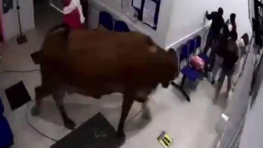 Pacientes huyen de enorme vaca en hospital de Colombia