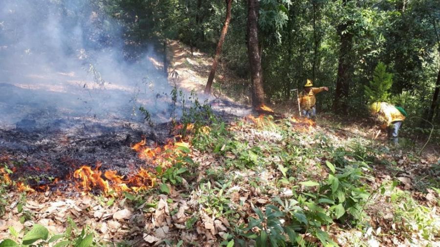 Alertas SOS de Google ya disponibles en México por incendios forestales