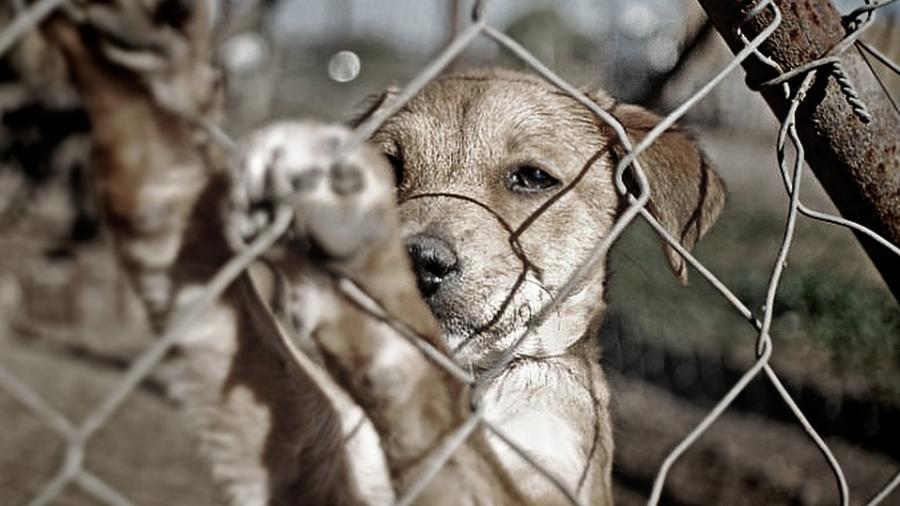 Fuertes sanciones por maltrato animal en Tampico