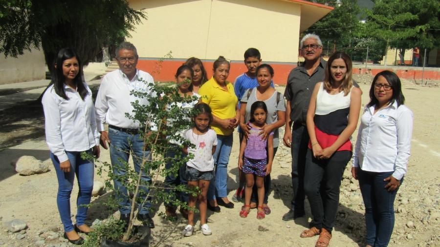 Reforestación en escuelas mitiga cambio climático