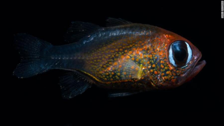 En 2019 se han descubierto al menos 71 nuevas especies