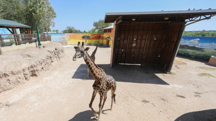 Zoológico invita a familias con entrada gratuita