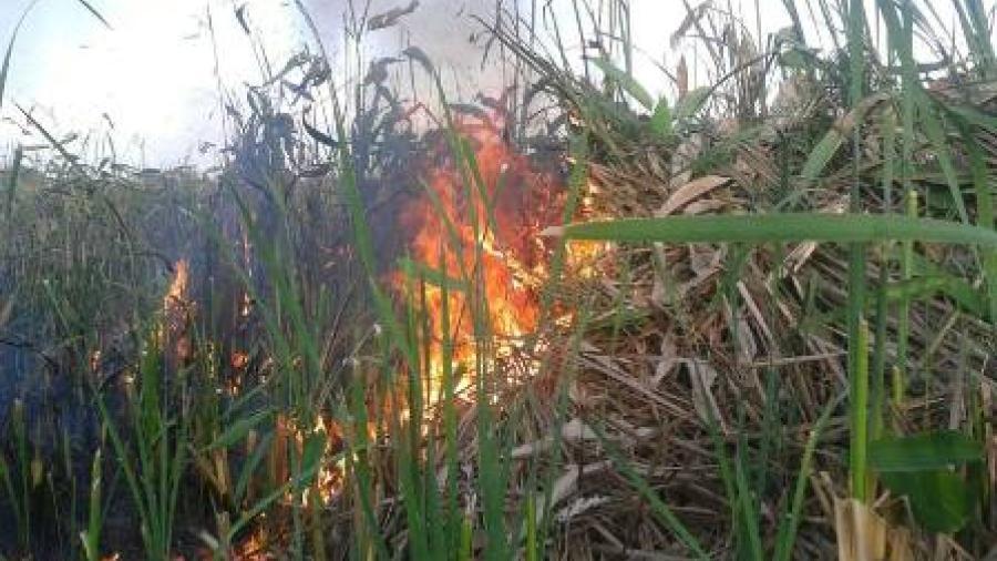 A investigación incendios forestales y de tules
