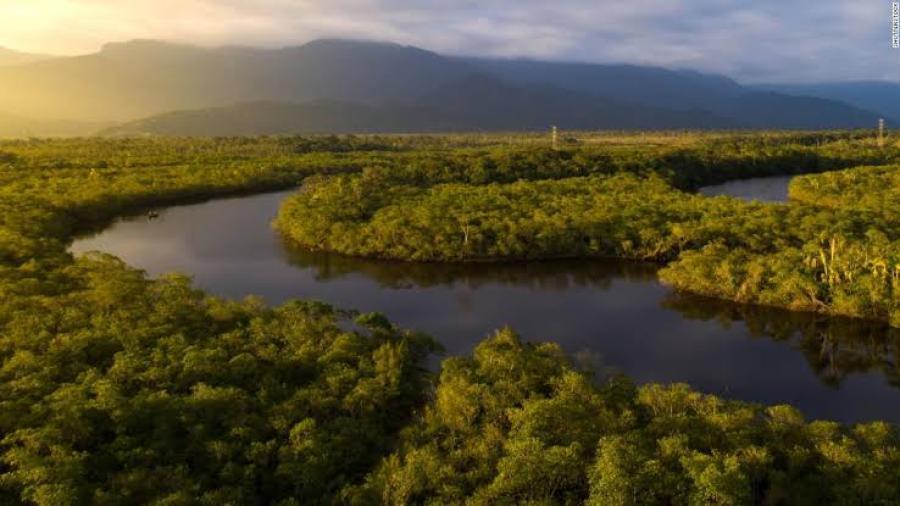 Deforestación del Amazonas llega a 67%