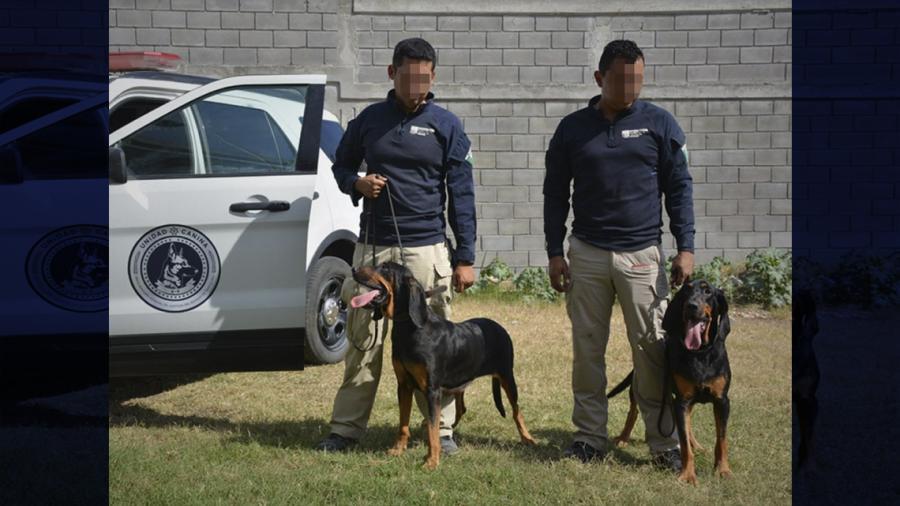 Fiscalía adquiere dos perros adiestrados para ejecutar labores de búsqueda de personas