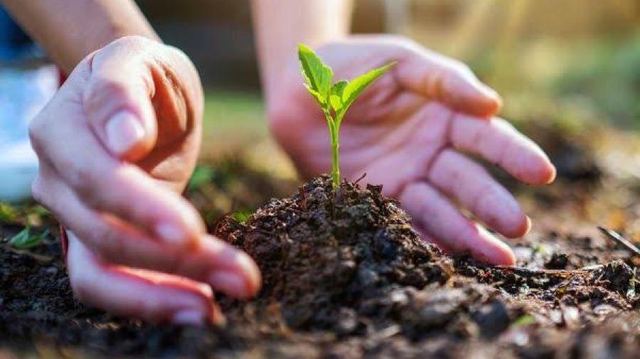 Gozar de un medio ambiente limpio ya es parte de los Derechos humanos
