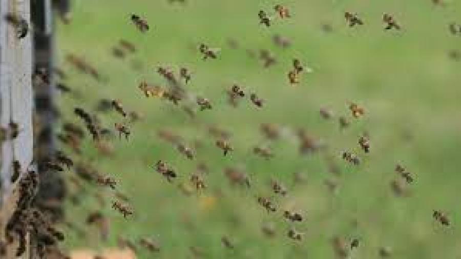 Envían a empleados del Condado Hidalgo al hospital tras más de 100 picaduras de abejas