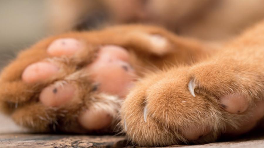 Aumenta envenenamiento de perros y gatos en Altamira