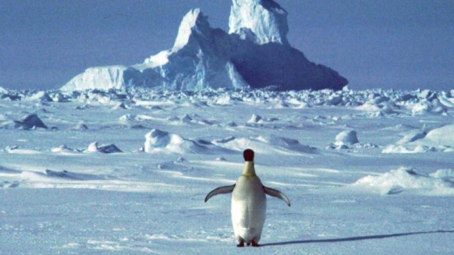 ONU verificará temperaturas récord en la Antártida