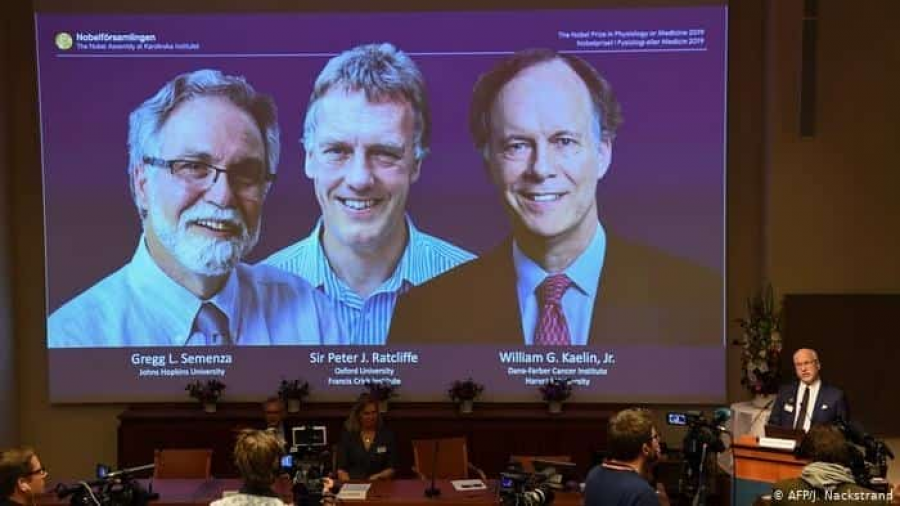 Otorgado el premio Nobel de Medicina a William Kaelin, Gregg Semenza y Sir Peter Ratcliffe