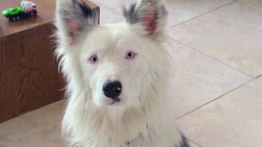 Votante adopta a perrito luego de seguirlo todo el día