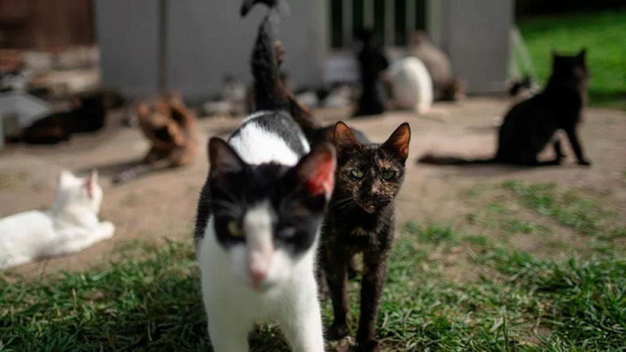 En Argentina, hombre mata a gatos con un rifle