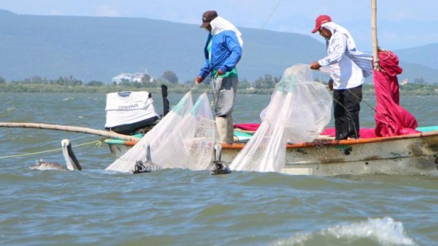 Implementan operativo por veda de camarón