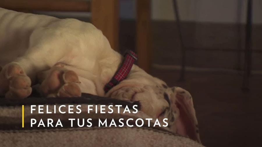 Nat Geo emitirá música e imágenes para mascotas este 24 y 31de diciembre