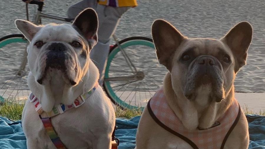 Recupera Lady Gaga a sus perros robados