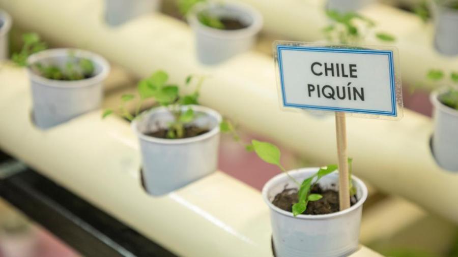 DIF Tamaulipas a través de huertos promueve una alimentación orgánica y genera oportunidades económicas a familias rurales