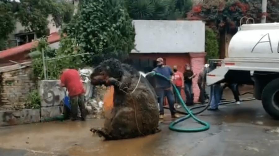 México mágico: encuentran botarga de rata gigante en alcantarilla de CDMX